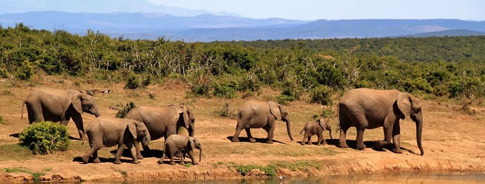 Ruta de elefantes