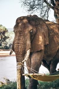 Gran elefante pasando junto a la hamaca de un turista