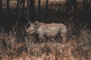 Rinoceronte en el lago Nakuru