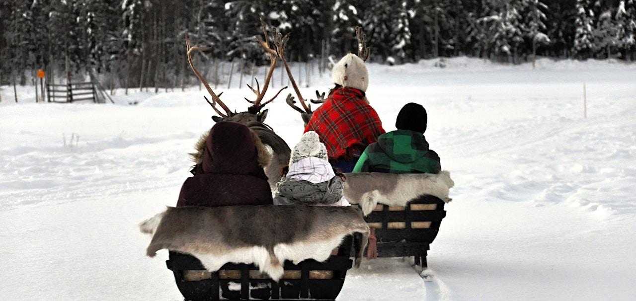 Paseo en trineo de renos en Laponia