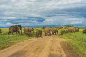 Manada de elefantes camino del Kilimanjaro